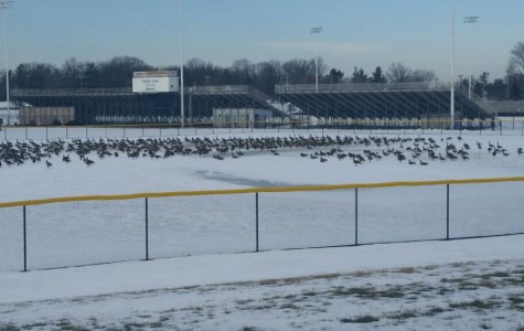Two mothers banned from North Penn Baseball fields