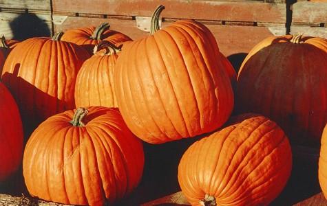 Top Ten Things to Pumpkin Spice