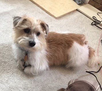 Scruffy is one of many dogs at the Almost Home Dog Rescue looking to be adopted.