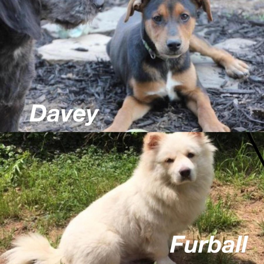 Davey and Furball are two of many dogs at the Almost Home Dog Rescue looking to be adopted.