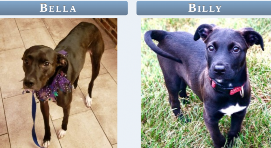 Bella and Billy are two of many dogs looking to find their forever home.