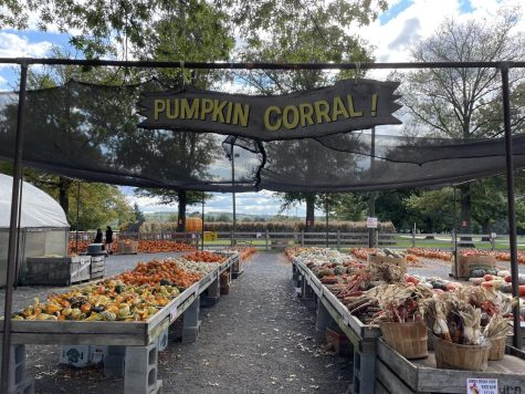Merrymeads selection of pumpkins this fall season